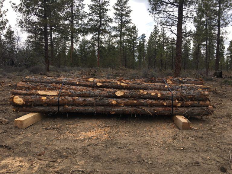 juniper poles
